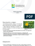 tithonia diversifolia.pptx