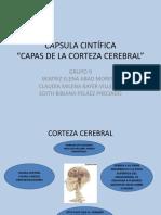CÁPSULA CIENTÍFICA.pptx
