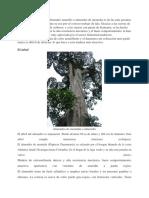 La madera de almendro.docx