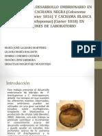 Diapositivas de Peces
