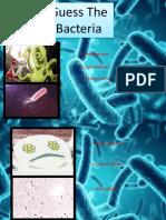 Bacteria.pptx