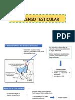 Descenso Testicular y Malformaciones Relacionadas