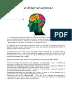 Les 12 Lois Du Cerveau