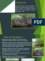 Ecologia de Manglares