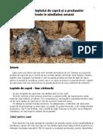 Actiunea_laptelui_de_capra_si_a_produsel.doc