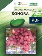 Agenda Técnica Sonora OK (1).pdf