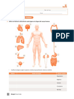 Ejercicio Sistema Humano