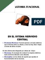 1. Neuro.fisiología