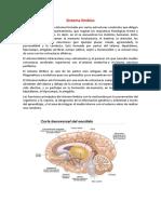 Sistema_límbico.pdf
