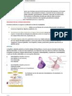 Resumen Endocrino