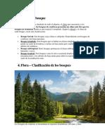 Clima Del Bosque
