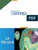Ciclo I La Celula