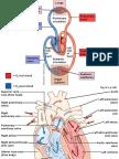 Physiology,  Cardio vascular system