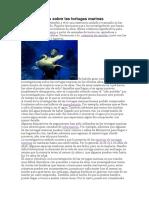 Investigaciones sobre las tortugas marinas.docx