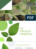 la celula vegetal