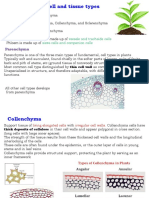 Plant Cell Biology #2