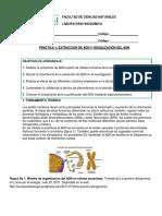 P1 Extracción de ADN (2).pdf