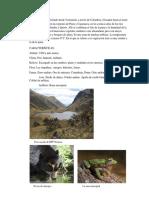 El páramo, Selva Baja, Selva Alta y Sabana de Palmeras