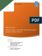 310718624-Informe-laboratorio-1-Botanica.docx