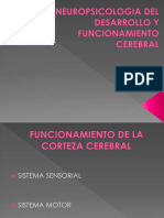 Neuropsicologia del desarrollo y funcionamiento cerebral