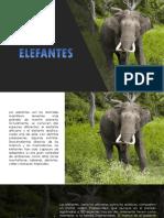 estudio elefantes