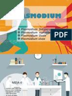 plasmodium pallidum diapositivas
