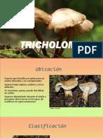 TRICHOLOMA expomartes