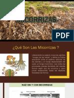 micorrizas.pptx