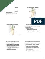 Appendicular Skeletal System