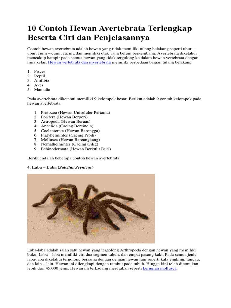 10 Contoh Hewan Avertebrata Terlengkap Beserta Ciri Dan Penjelasannya