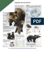 Infografía del Oso Pardo.pdf