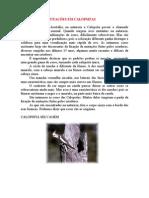 CATÁLOGO DE MUTAÇÕES EM CALOPSITAS