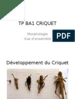 Tp Ba1 Criquet Compatible-2