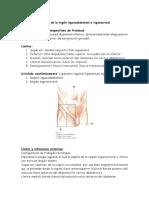Anatomía topográfica de la región inguinoabdominal e inguinocrural importante resumen.docx