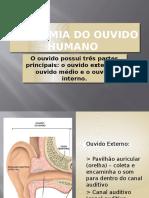 Anatomia Do Ouvido Humano (1)