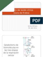 325384794-Ciclo-de-Krebs.pdf