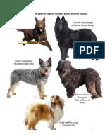 Razas de perros segun FCI
