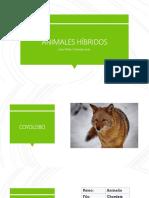 Animales Híbridos