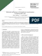 Molecular Mechanisms of B-Lymphocyte Transformation
