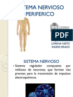 Sistema Nervioso Periferico Final (1)
