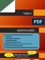 TAREA 1 (BGU A-B-C-D)(1).pptx