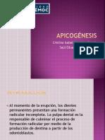 apicogénesis seminario 2.pptx