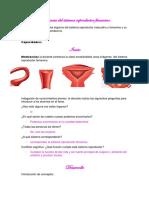 Secuencia Del Sistema Reproductor Femenino-1