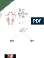 Arterial Supply