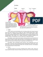 Alat Genitalia Wanita Bagian Dalam