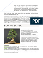 BONSAI BOSSO.docx