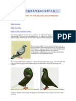 The History of the Belgian Race Pigeons