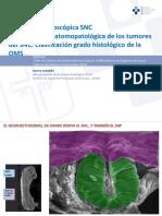 Anatomia Microscopica SNC, Clasificacion y Tumores Del Tejido Neuroepitelial