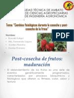 Postcosecha-de-frutos.pptx