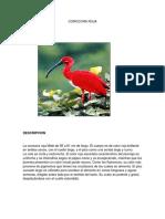 Corocora Roja